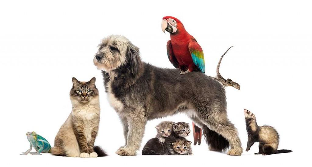 heartland-pets-s