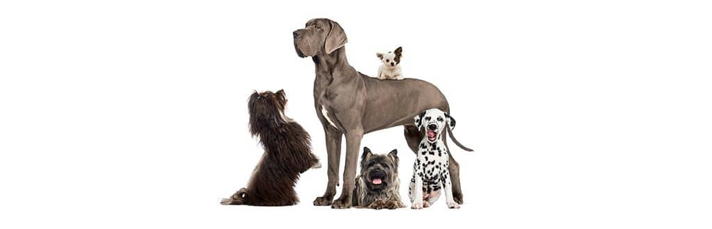 Group of large and small dogs