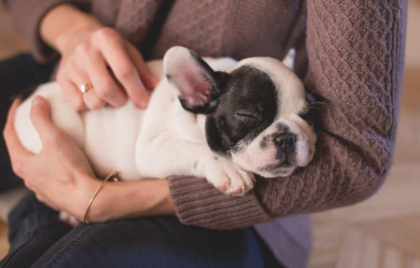 pet cremations in St. Louis, MO