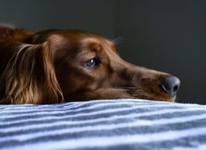 What to Know About Dog Cremations