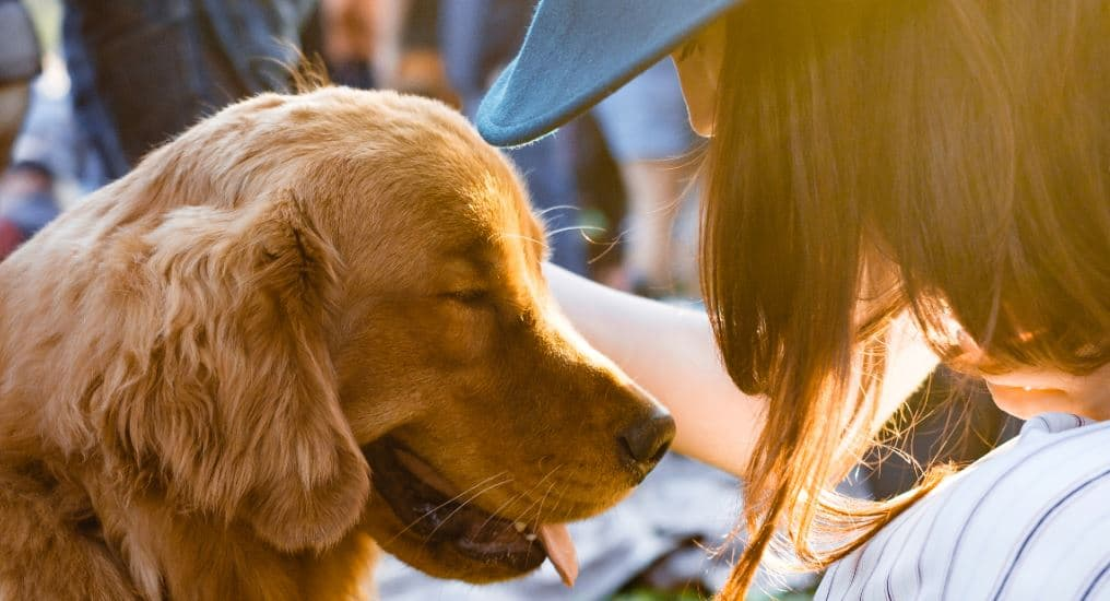 pet cremations in Clayton, MO
